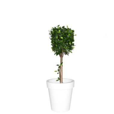 Ficus Tree Artificial
